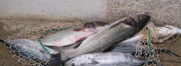 Compte rendu du concours de pêche inter-mouillages du 09 juillet 2016